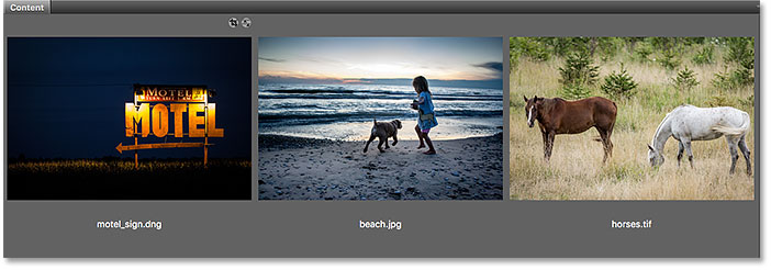 A raw file, JPEG and TIFF in Adobe Bridge.