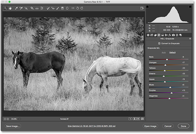 The image in Camera Raw after converting it to black and white.