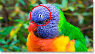 Hovering the mouse over an area on the bird's head