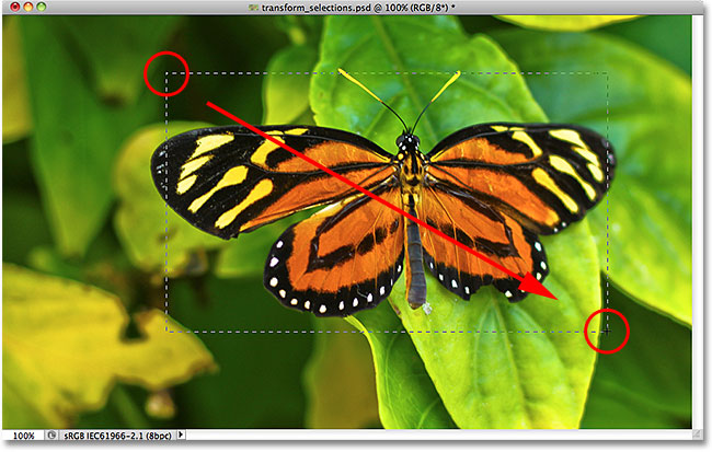 Drawing a rectangular selection around the butterfly.
